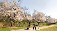A family walks among the flower trees in Freedom Park in Charlotte, NC