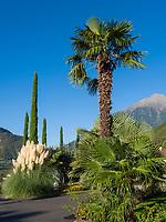 Garten vom Nutzhof, Algund bei Meran, Region Südtirol-Bozen, Italien, Europa<br /> Garden of Nutzhof,  Lagundo near Merano, Region South Tyrol-Bolzano, Italy, Europe