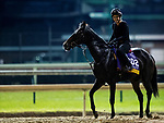 October 31, 2018 :  Champagne Problems, trained by Ian R. Wilkes, exercises in preparation for the Breeders' Cup Distaff at Churchill Downs on October 31, 2018 in Louisville, Kentucky. Evers/ESW/Breeders Cup