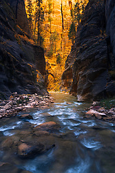 Late morning light bathes the canyon walls of a remote section in Zion's Virgin River Narrows.
