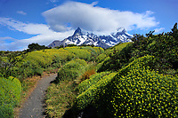 Chile - National Park Torres del Paine<br /> Hiking trail to the Mirador Cuernos del Paine<br /> at Lago Nordenskjöld