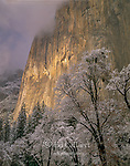 El Capitan, Valley Oaks, Yosemite Valley, Yosemite National Park, California