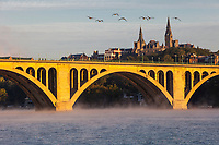 Canada Geese Fly over Key Bridge over the Potomac River, Early Morning, Looking toward Georgetown University, Washington DC, USA.