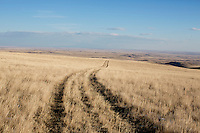 North Central Montana Ranch Landscapes