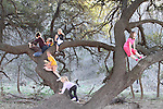 Families in Nature kids hanging out in a tree by Shoal Creek in Austin.  The kids are:  Maggie, Morgan, Janssen, Sawyer W., Jennings, Akshay, Ethan and Garrett
