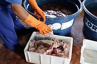 Campinas (SP), 31/03/2021 - Policia - A Policia Civil e o Serviço de Inspeção de Produtos de Origem Animal encontraram na tarde desta quarta-feira (31) grande quantidade de carne seca, fabricada irregularmente em uma residencia, no Jd Montreal na cidade de Campinas, interior de São Paulo.