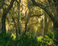 A brief moment of beautiful sunset light shimmers through the maritime forest wilderness of Cumberland Island National Seashore.