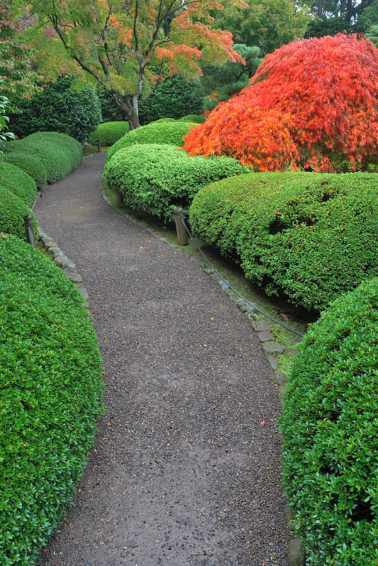 Fall color and path at Japanese Gardens. Portland. Oregon