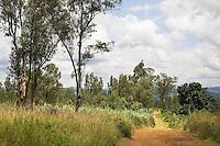 Rwanda. Southern province. Kiyonza village. A black man walks on a dirt road. Eucaliptus trees. Green vegetation.  © 2007 Didier Ruef