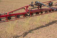 Applying herbicide to onions - Lincolnshire, April