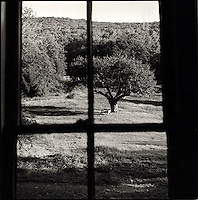 View of solitary tree and bench through window<br />