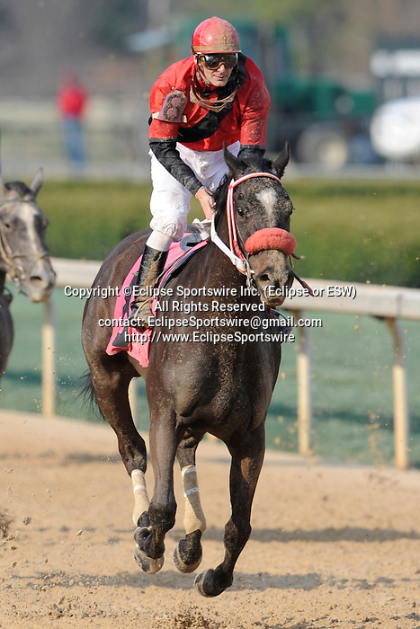 #8 Kiss Moon with jockey Terry J. Thompson aboard during the running of the Honeybee Stakes (Grade III) at Oaklawn Park in Hot Springs, Arkansas-USA on March 8, 2014. (Credit Image: © Justin Manning/Eclipse/ZUMAPRESS.com)