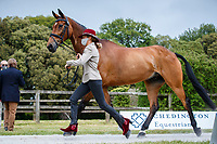 GBR-Sarah Bullimore presents Reve du Rouet during the First Horse Inspection for the CCI-L 4*. 2021 GBR-Bicton International Horse Trials. Devon. Great Britain. Copyright Photo: Libby Law Photography