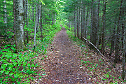 "East Pond Trail in Lincoln, New Hampshire during the spring months. This section of the trail utilizes an old spur line of the Hancock Branch of the East Branch & Lincoln Railroad (1893-1948) in New Hampshire. This spur line was known as ""The Siding"", and Camp 14 was along it."