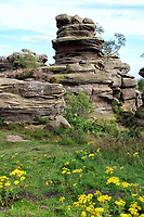 Brimham Rocks is a biological Site of Special Scientific Interest (SSSI)  north west of Harrogate, North Yorkshire, England. The site is known for its water and weather eroded rocks, which were formed over 325 million years ago. Yorkshire on August 7th 2020<br /> <br /> Photo by Keith Mayhew