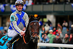 31 October 2009: Blame (no 9), ridden by Jamie Theriot, and trained by Albert M. Stall Jr. returns to his connections after winning the 51st running of the $150,000 Fayette Grade II stakes race.