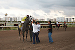 Graydar and jockey Edgar Prado after winning the Donn Handicap (G1) at Gulfstream Park.  Hallandale Beach Florida. 02-09-2013