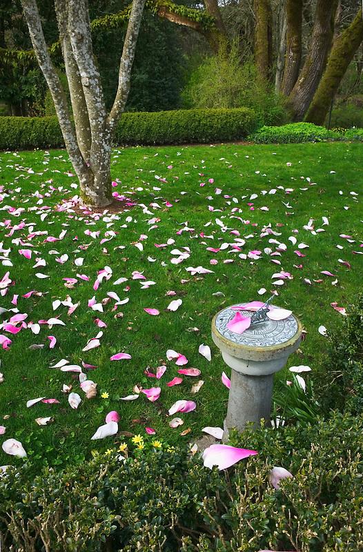 Deepwood Estate with sundial and tulip tree. Salem, Oregon