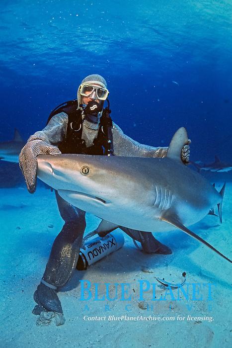 scuba diver in steel chain mail mesh suit and Caribbean reef shark, Carcharhinus perezii, Bahamas, Caribbean, Atlantic