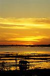 Tonle Sap Sunrise 02 - A farmer with water buffaloes ploughing his rice fields at sunrise, Tonle Sap lake, Chong Kneas, Siem Reap, Cambodia