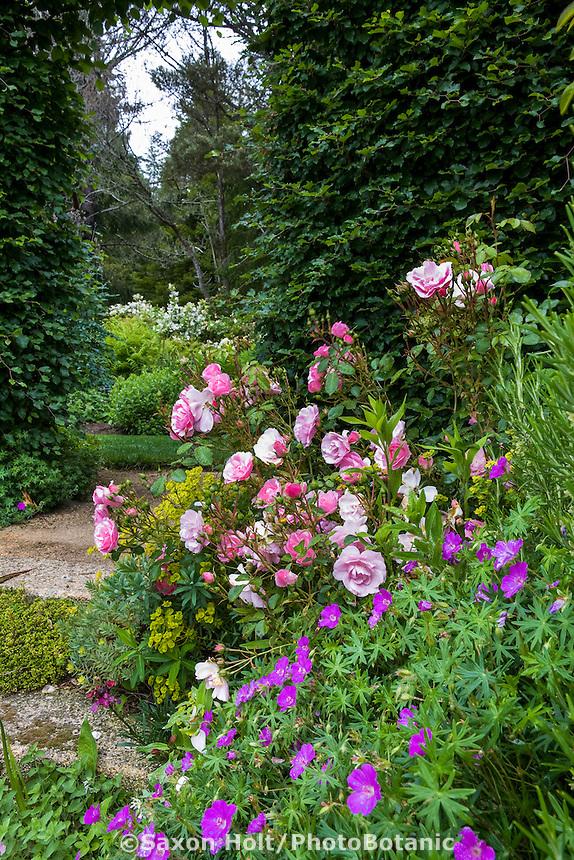 Entry through Beech hedge from mixed garden border with Rose 'Cornelia', Geranium sanguineum, Digging Dog Nursery
