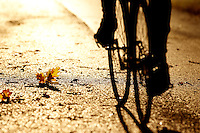 Autumn Cycling and Mountain Biking