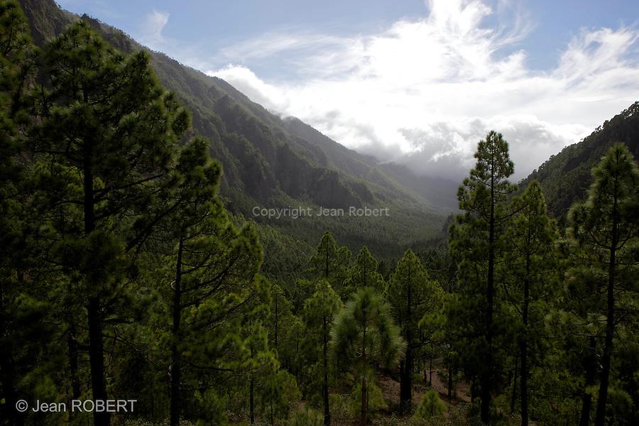 Forêt de pins canariens, caldeira de Taburiente.vu depuis le col de La cumbrecita.Canarian pines forest, in de Taburiente seen from La Cumbrecita pass