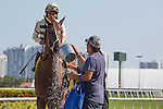 March 21, 2015: Classic Point (#4) ridden by Paco Lopez and trained by Jimmy Jerkens win the Inside Information Stakes (G2) at. Gulfstream Park, Hallandale Beach (FL). Arron Haggart/ESW/CSM