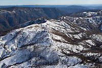 aerial photograph of charred trees damaged by the Mendocino Complex Wildfire of 2018 in the Snow Mountain Wilderness, Mendocino National Forest, Lake County, California; view from west to east