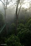 Canopy trail de 300 m de long et 26 m de haut, le plus long du monde. Longest canopy trail in the world, 300 m , 26 m high Danum valley.Sabah Ile de Bornéo