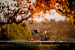 October 31, 2020: Japanese runners Jasper Prince and Pingxiang walk the training track at Keeneland Racetrack in Lexington, Kentucky on October 31, 2020. Alex Evers/Eclipse Sportswire/Breeders Cup