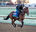 October 31, 2020: Into The Sunrise, trained by trainer Wesley A. Ward, exercises in preparation for the Breeders' Cup Juvenile Turf at Keeneland Racetrack in Lexington, Kentucky on October 31, 2020. Scott Serio/Eclipse Sportswire/Breeders Cup/CSM