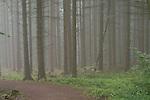 Europa, DEU, Deutschland, Saarland, Naturpark Saar-Hunsrueck, Wald, Nebel, Dunst, Morgens, Daemmerung, Kategorien und Themen, Natur, Umwelt, Landschaft, Jahreszeiten, Stimmungen, Landschaftsfotografie, Landschaften, Landschaftsphoto, Landschaftsphotographie, Wetter, Wetterelemente, Wetterlage, Wetterkunde, Witterung, Witterungsbedingungen, Wettererscheinungen, Meteorologie, Wettervorhersage....[Fuer die Nutzung gelten die jeweils gueltigen Allgemeinen Liefer-und Geschaeftsbedingungen. Nutzung nur gegen Verwendungsmeldung und Nachweis. Download der AGB unter http://www.image-box.com oder werden auf Anfrage zugesendet. Freigabe ist vorher erforderlich. Jede Nutzung des Fotos ist honorarpflichtig gemaess derzeit gueltiger MFM Liste - Kontakt, Uwe Schmid-Fotografie, Duisburg, Tel. (+49).2065.677997, ..archiv@image-box.com, www.image-box.com]