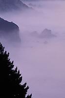 California, Big Sur, Early morning fog south of Ventana
