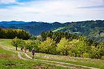 Germany, Baden-Wurttemberg, Black Forest, near Oberharmersbach: resort at Central/North Black Forest Nature Park - hikers to Brandenkopf mountain | Deutschland, Baden-Wuerttemberg, Schwarzwald, bei Oberharmersbach: Urlaubsort im Naturpark Schwarzwald Mitte/Nord - Wanderer auf dem Harmersbacher Vesperweg unterwegs zum Brandenkopf, einem der hoechsten Berge des Mittleren Schwarzwaldes