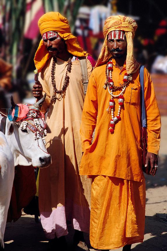 Holy men with decorated cow Pushkar Camel Fair Pushkar Rajasthan India.