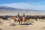 Nick and Jackie Dowers at a cattle roundup at the Triple D Ranch in Dyer, Nevada. Nick is the 2013 National Reined Cow Horse Association Snaffle Bit Futurity Open Champion