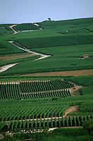 Europe/France/Champagne-Ardenne/51/Marne/Cumières: Vignoble Champenois de la Vallée de la Marne