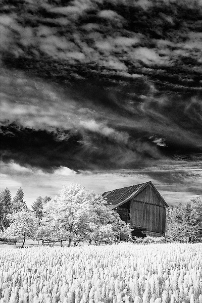 Infrared image of old barn in clover field