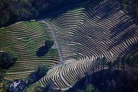 aerial photograph of mountainside vineyards, Mayacamas Mountains, Napa County, California