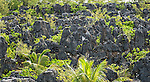 Landscape created by phosphate mining on the island of Nauru