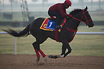 DUBAI,UNITED ARAB EMIRATES-MARCH 23: Sharp Azteca,trained by Jorge Navarro,exercises in preparation for the Godolphin Mile at Meydan Racecourse on March 23,2017 in Dubai,United Arab Emirates (Photo by Kaz Ishida/Eclipse Sportswire/Getty Images)