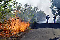 Photographers, Mango tree, Lava flow in the trees and on highway 137, Near Hawaii, USA Volcanoes National Park, Kalapana, Hawaii, USA, The Big Island of Hawaii, USA