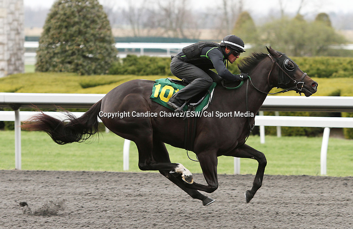 April 03, 2014: Hip 101 Malibu Moon - Folklore consigned by Niall Brennan worked 1/8 in 10:0  .  Candice Chavez/ESW/CSM