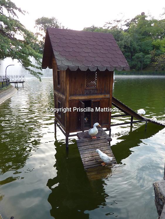 Ducks make use of the duck house in Yildiz Park, Istanbul.