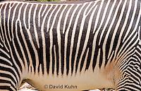 0608-1106  Grevy's Zebra (Imperial Zebra), Details of Stripes, Equus grevyi  © David Kuhn/Dwight Kuhn Photography