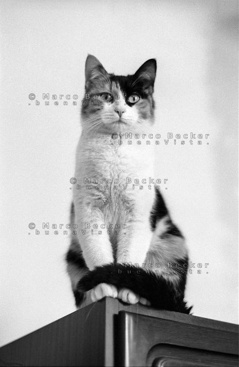 Gatto rilassato ---  Cat relaxed