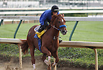 Line of David works over the Churchill Downs track in preparation for The Kentucky Derby.. 04.20.2010