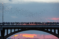 """Austin is home to the largest urban colony of Mexican free-tailed bats in North America. Each night, from April to October, an estimated 1,500,000 bats emerge from underneath the Congress Avenue Bridge at sundown on their nightly search for food. Some quick bat facts:<br /> <br /> • The bats made the Congress Avenue Bridge home after it was renovated in 1980. 15 crevices underneath the bridge make the perfect roosts for bats.<br /> • Each night the bats consume about 10,000 - 30,000 pounds of insects.<br /> • The Mexican free-tailed bat is the official """"flying mammal"""" of the State of Texas. I never knew there was such a thing to be official!<br /> • Although the bats can be seen from April through October, the best time to see them is late August or early September, when the babies, or pups, come out with their mamas."""