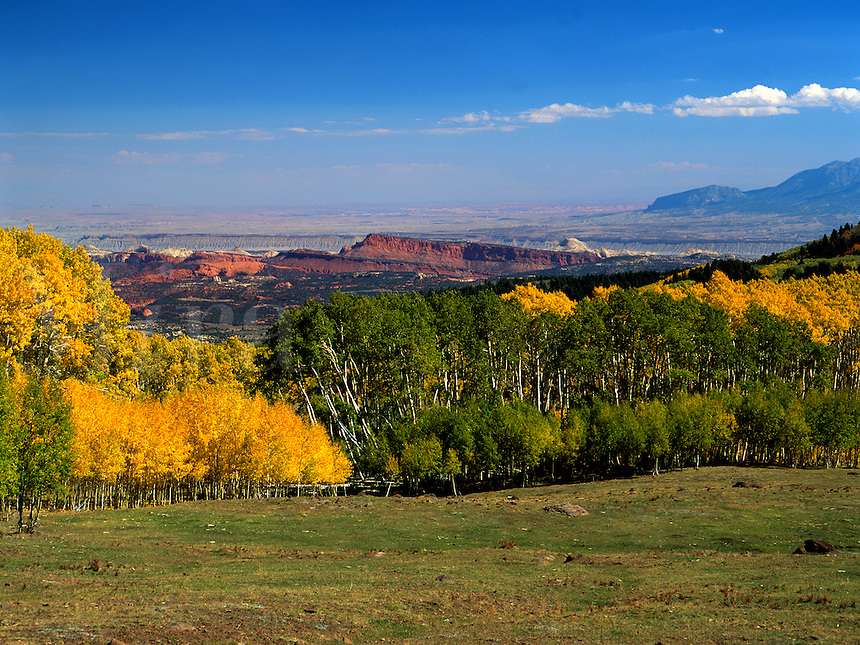 Art in Nature 9609-0162 - The distant pink cliffs of Waterpocket Fold contrast with the yellow of autumn Aspens as seen from Boulder Mountain. Capitol Reef National Park, Utah.